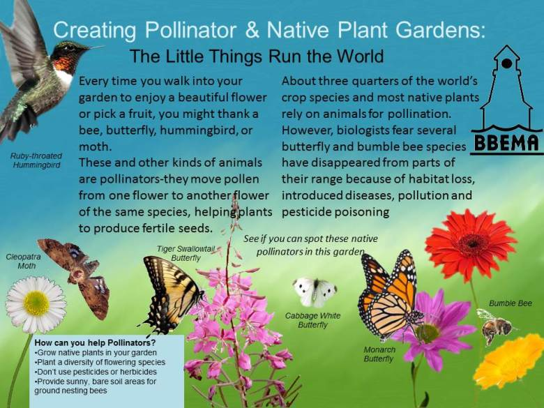Creating Pollinator & Native Plant Gardens